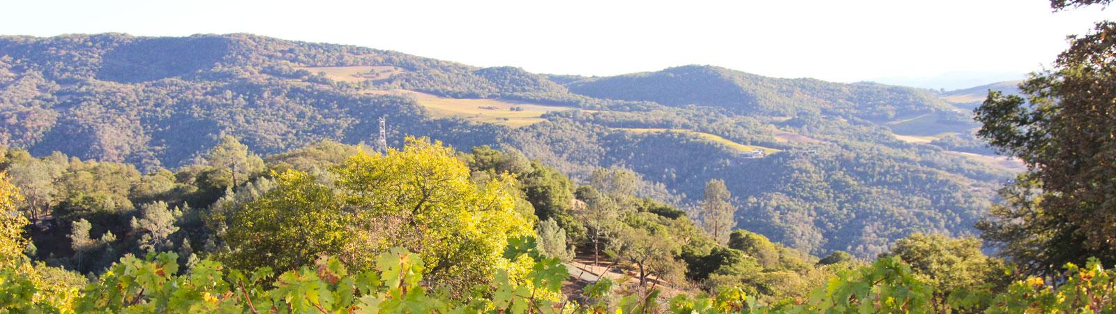 Pritchard Hill